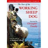 Working Sheep Dog