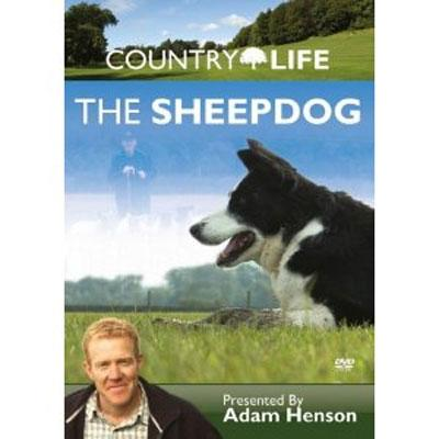 The Sheepdog